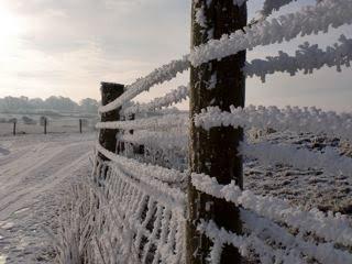 [snow+fence]