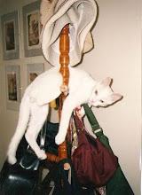 Mingau é um gato especial!!!