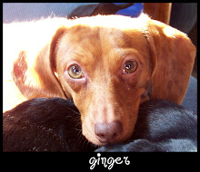 GINGER 10/26/2007