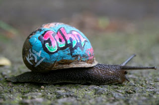 amazing snails graffiti