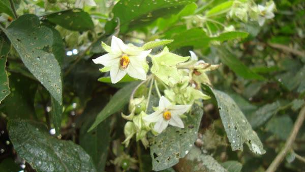 flor muito atrativa às abelhas
