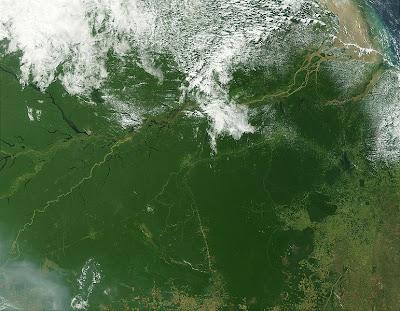 amazon, amazon urban civilization, urban civilization,amazon rainforest,amazon river,amazon brazil,amazon forest,amazon jungle