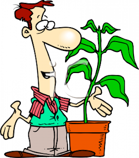 talking plants, cartoon plant, funny plants, green plants