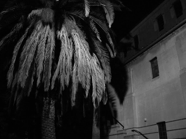 palm tree hollywood boulevard temple israel fuller