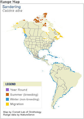 Sanderling Distribution