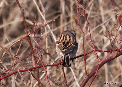 Quiz Bird - Image 2