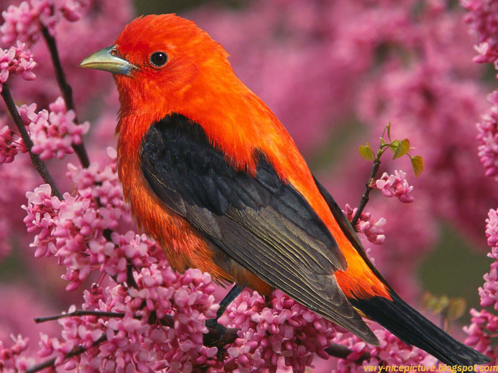 Nice Wallpapers, Beautiful Birds pictures, Natural Wallpapers | Nice Wallpapers, Animals, 3D ...
