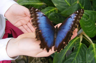 L'effet Papillon dans PAPILLON