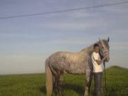 ces beaux chevaux!!!!!