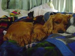 Nuestro perrito querido