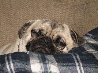 You Think My Life Is Boring?  You just scrolled all the way down to the bottom of a PUG'S Blog!