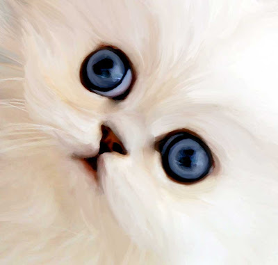 How Much Does a Persian Cat Cost wallpapers