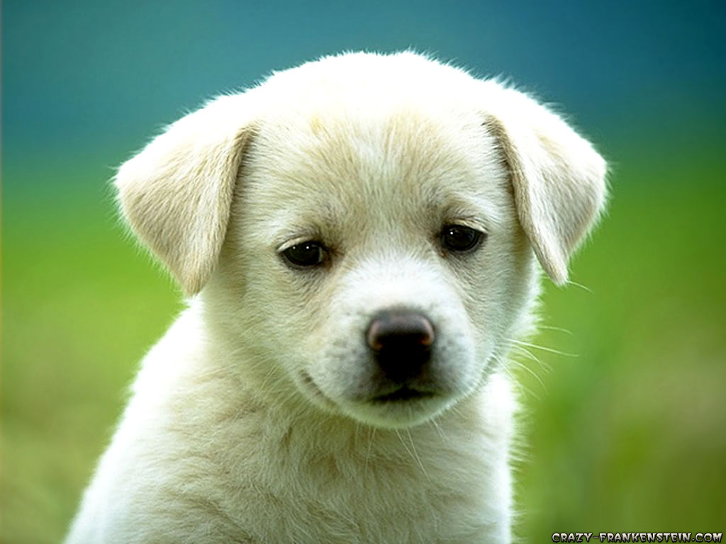 Email This BlogThis! Share to Twitter Share to Facebook ... Cute Puppies
