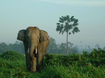 [Gajah+Sumatra_Outlandjava.jpg]