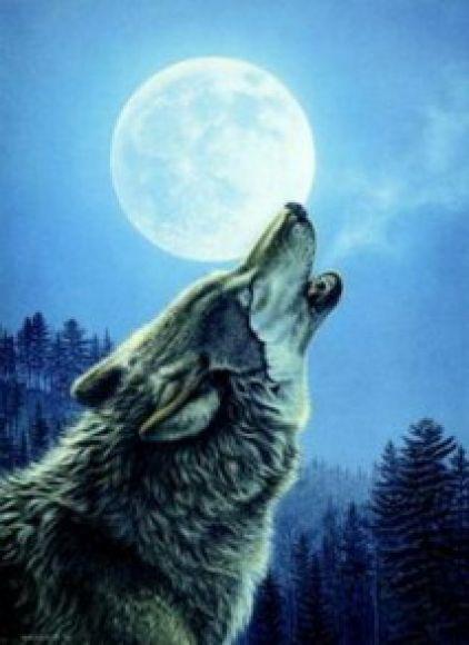 Lobos aullando bajo la luna - Imagui