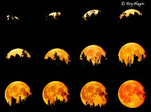 13 lunas