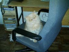 Com a palavra o gatinho Fontaine!
