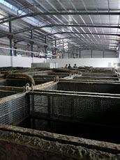 Pabrik Pengolahan Rumput Laut