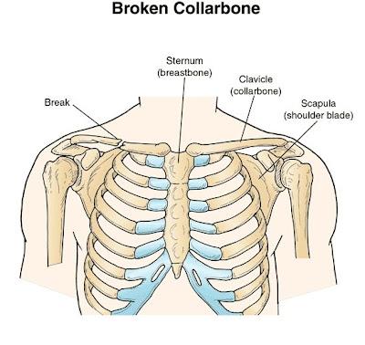 Collarbone 101 Collarbone 101