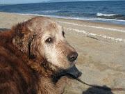 Le vieux sage et la mer...