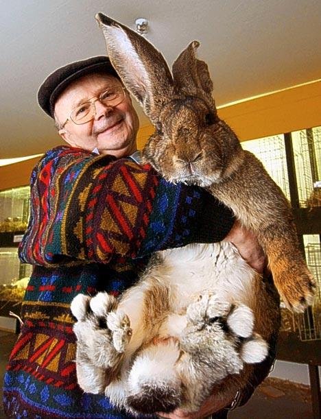 [big-bunny.jpg]