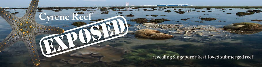 Cyrene Reef Exposed!