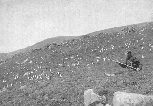 Comunismo feudal St_Kilda_puffins_hunting1898