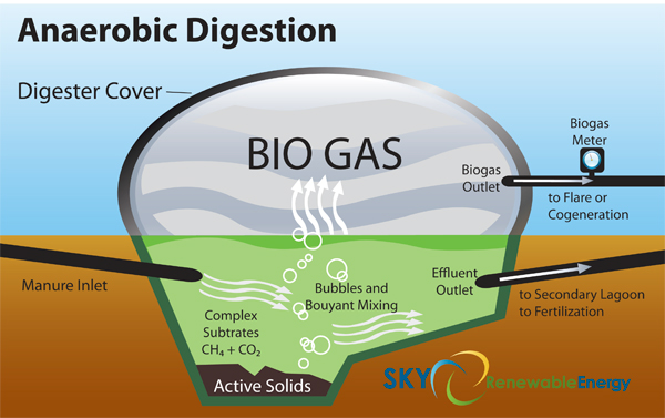 This illustration demonstrates how manure can be transformed into