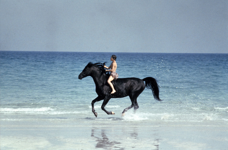 Смотреть онлайн the mademoiselle s stallions 25 фотография