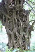 แปลกตา..จากต้นไม้