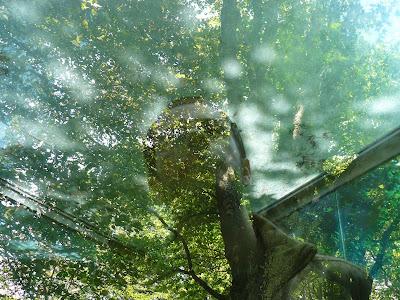 Eu nos Jardins de Serralves, Porto