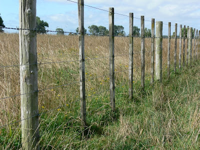 woolshed 1 cattle farm husbandry fencing for cattle