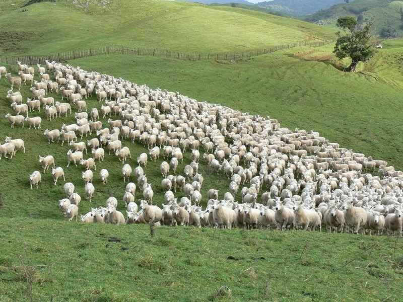 how to get old paddock ready for live stock