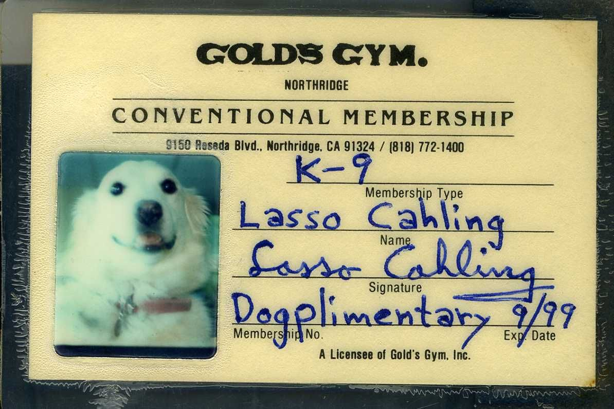 My Dog's Gold's Gym Membership Card | Bodybuilding and Fitness by ...