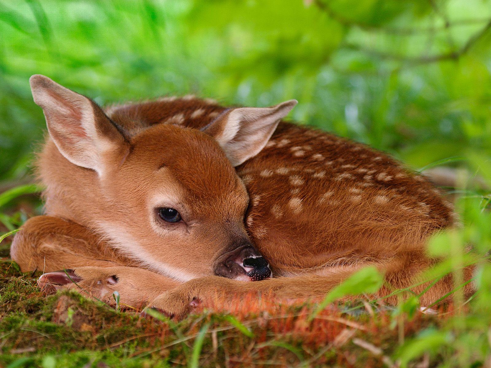 http://4.bp.blogspot.com/_W1VhkUCefIk/S84Dhh4d3II/AAAAAAAAAFU/32AeMBoJLQw/s1600/animal_0004.jpg