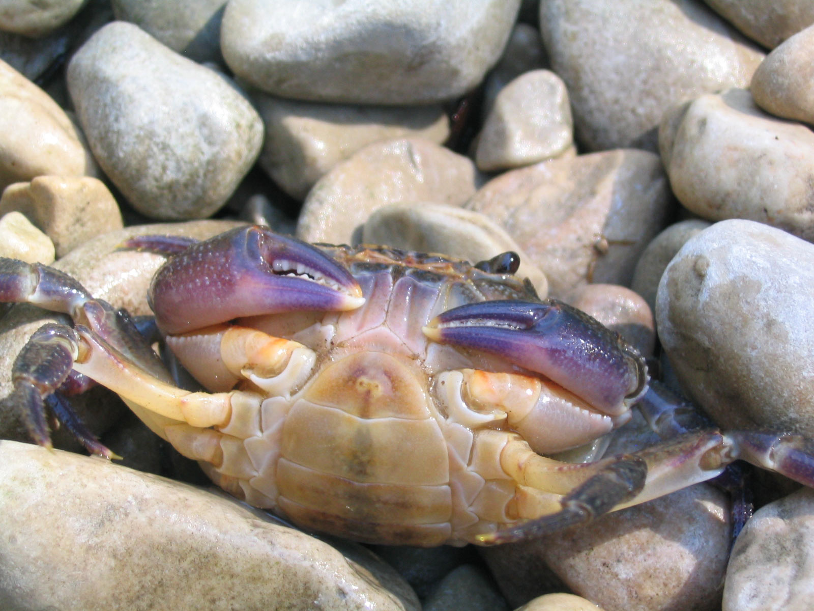 http://4.bp.blogspot.com/_W1VhkUCefIk/S9IjTJW_bDI/AAAAAAAAAJU/mpRCiCRRTjA/s1600/animal_0059.jpg