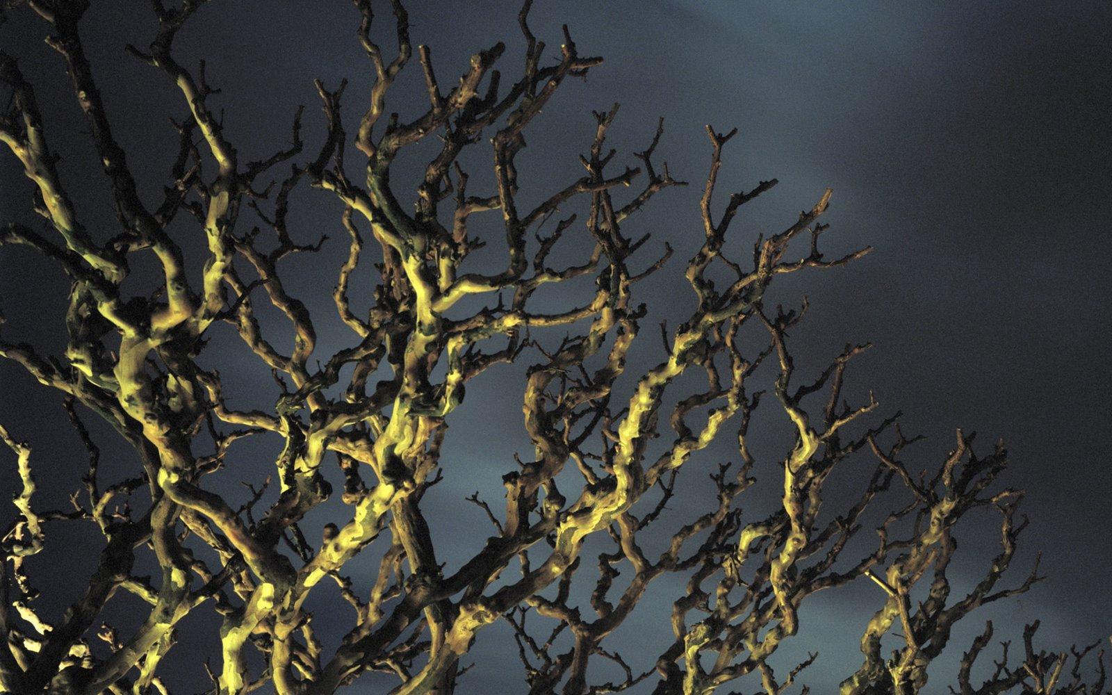 http://4.bp.blogspot.com/_W1ueYt1O3xs/TMv7hk7jBFI/AAAAAAAAXAE/BwczOR3NLis/d/Halloween+Wallpapers+1920x1200-7.jpg