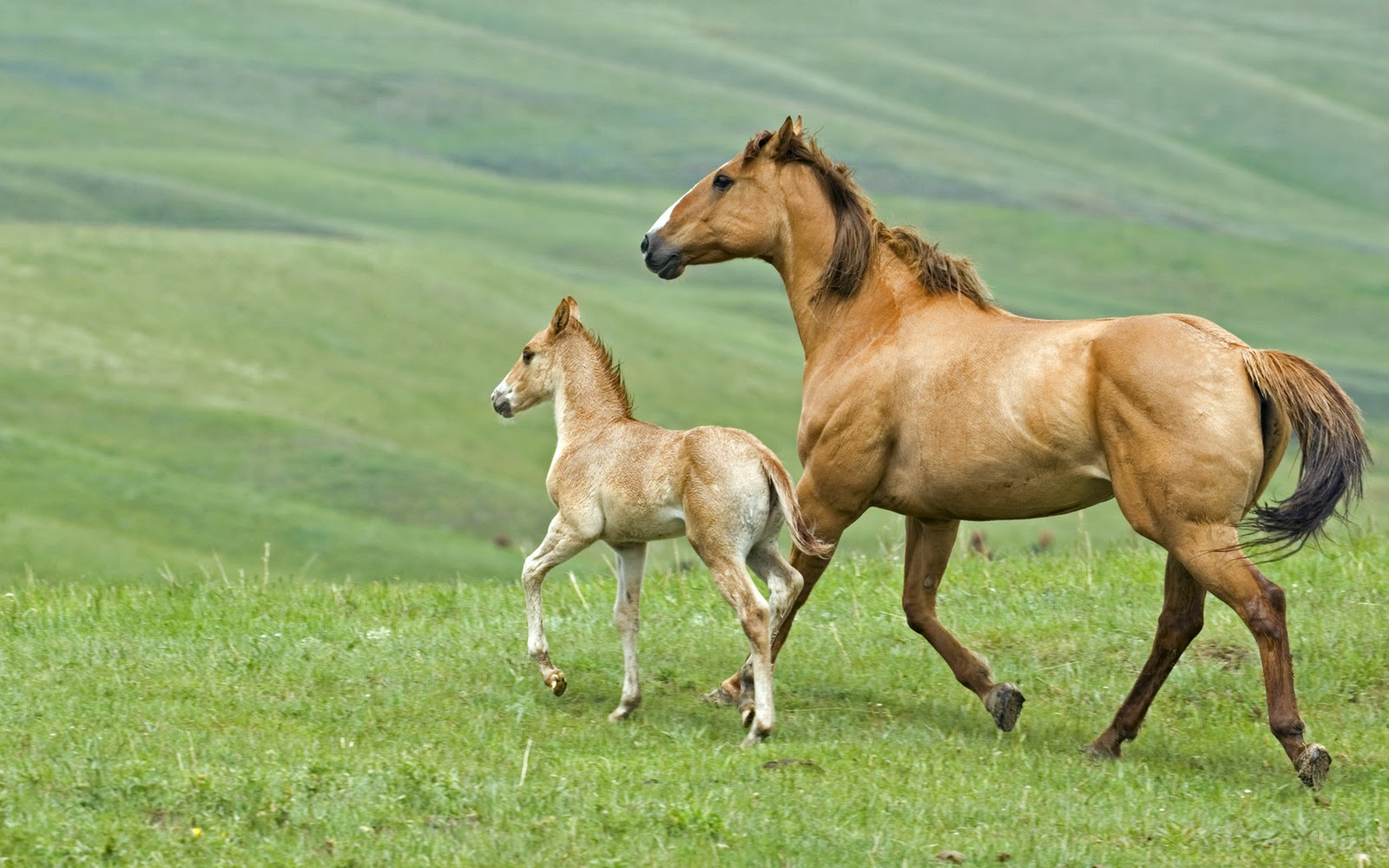 http://4.bp.blogspot.com/_W1ueYt1O3xs/TOey-TCMDkI/AAAAAAAAXUE/0FxgJb4lHK8/s1600/Horses+Wallpapers+1920x1200-1.jpg