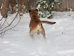 Shar bounds out in the new snow