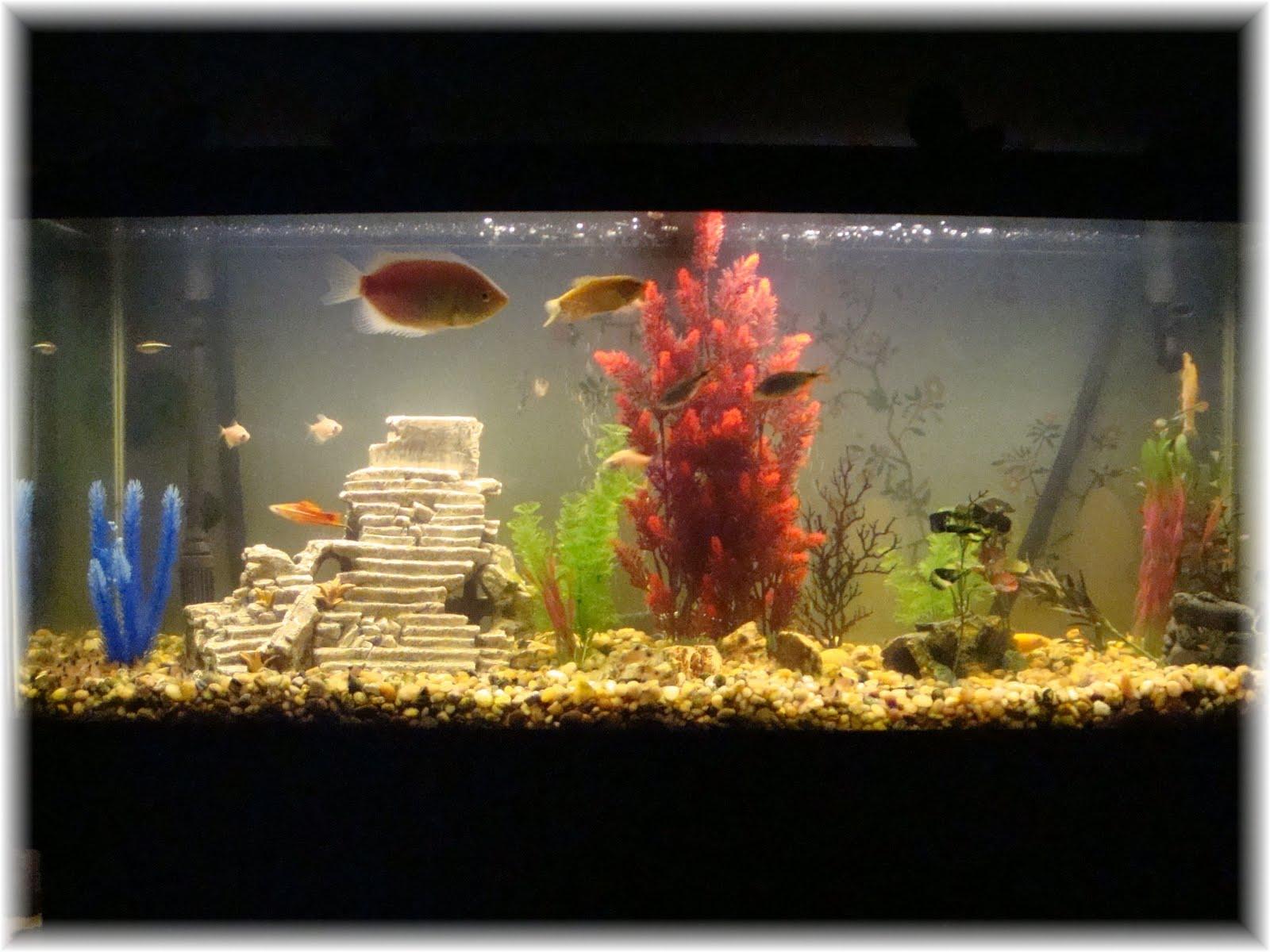 Small fish tank maintenance nj custom design aquarium nj for How to maintain fish tank