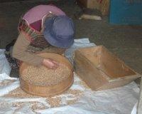 O trigo