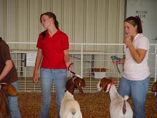 County Livestock Show