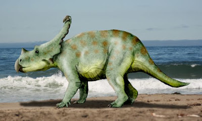 The dinosaur Vagaceratops