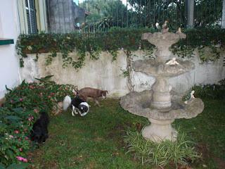 Cheirando o jardim