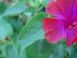 Un nuevo hobby... fotografiar flores