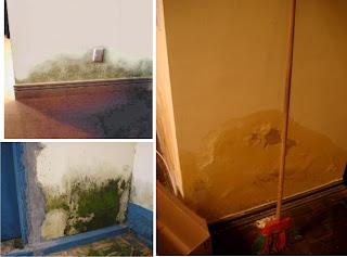 Umidade e mofo na parede e agora?