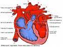Funciones motoras de la medula espinal reflejos medulares ppt