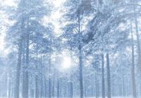 PF 2007 - zimní les