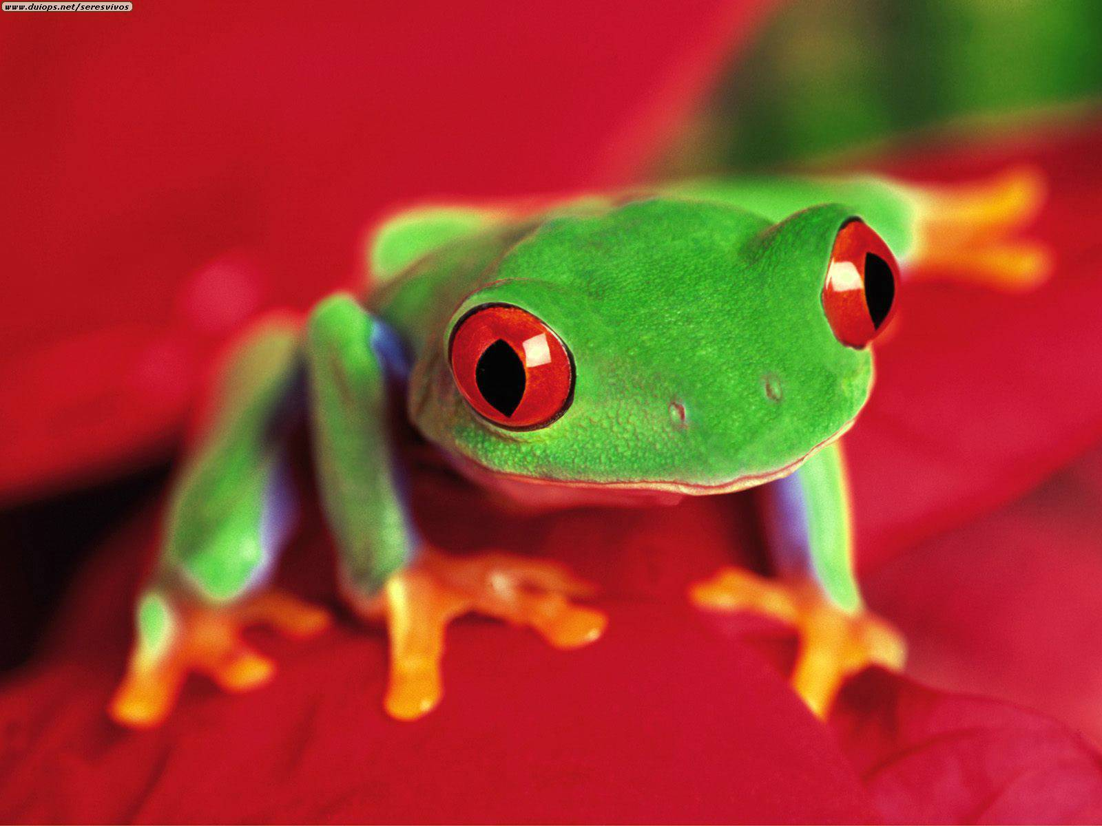 Tree frogs live in the Rainforest.They eat flies and bugs.Ther great