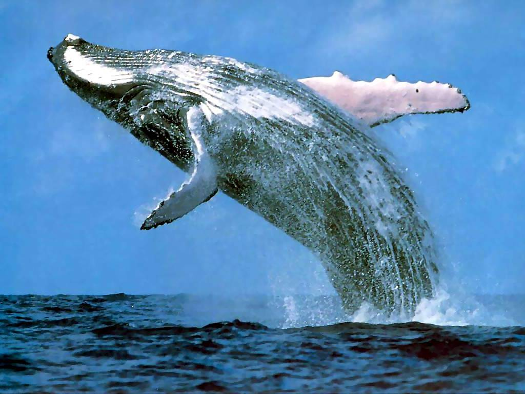 Blue Whale Amazing Photos